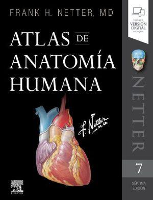 NETTER. ATLAS DE ANATOMÍA HUMANA 7ª ED.